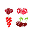 red berries on white background vector image vector image