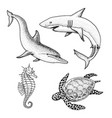 sea creature dolphin and white shark cheloniidae vector image vector image