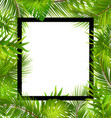 beautiful border with tropical palm leaves vector image