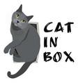 cat in box simple vector image