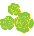 ordinary cabbage three vegetables as in garden vector image vector image