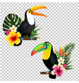 toucan collection vector image vector image