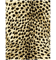 cheetah leopard animal skin texture vector image
