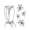 set of hand drawn line art bulb pot flowers vector image