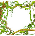 twisted wild lianas branches frame vector image vector image