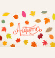 autumn special offer calligraphic logo with color vector image