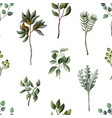 seamless pattern with eucalyptus magnolia vector image