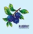 digital detailed color blueberry hand drawn vector image