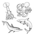 sea creature or fishes dolphin and white shark vector image
