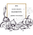 collection of hand drawn autumn vegetables vector image