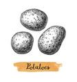 ink sketch potatoes vector image vector image