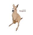 kangaroo hand drawing vector image vector image