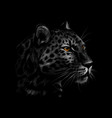 portrait of a leopard head on a black background vector image vector image