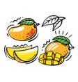 set mango fruits on white background vector image vector image