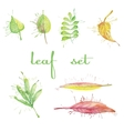set of different watercolor leaves vector image