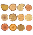 tree cut sections wood icons set vector image