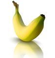 banana with reflection vector image
