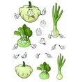 Cartoon onion squash kohlrabi vegetables vector image vector image