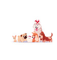 group of cute dogs sitting isolated on white vector image