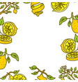 lemon fruit frame empty template vector image vector image