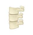 anatomy of lumbar spine part of human backbone vector image vector image