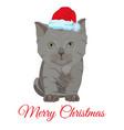 cute sad little kitten in santa hat flat vector image vector image