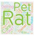 Pet Rat Care The Top Mistakes Of New Rat Owners vector image vector image