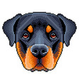pixel rottweiler dog face isolated vector image
