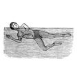 Sidestroke vintage engraved vector image vector image