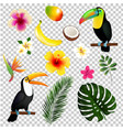 tropical leaves toucan and fruit vector image vector image