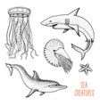 fishes or sea creature dolphin and white shark vector image