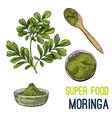full color super food hand drawn sketch vector image vector image
