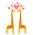 funny of a couple of giraffes in love vector image
