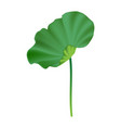 lotus leaf vector image vector image