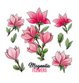 magnolia flowers hand drawn set vector image