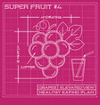 Blueprint diagram line drawing of red grapes vector image vector image