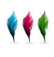color feathers vector image