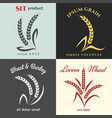 ears of wheat logo set vector image vector image