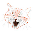 face red cat vector image vector image