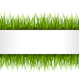 Green grass with frame isolated on white Floral vector image vector image