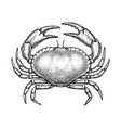 ink sketch of edible crab vector image vector image