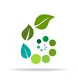 scroll growing healthy leafs logo vector image