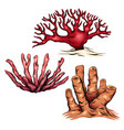 set of various colorful cartoon corals the object vector image