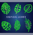 tropic leaves neon set detailed template icons vector image vector image