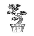 bonsai tree engraving vector image vector image