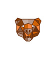Brown Bear Head Low Polygon vector image