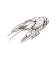 crayfish monochrome sketch vector image