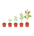growth of plant in pot from sprout to fruit vector image
