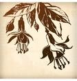 ornamental fuchsia flower card vector image vector image