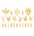 wheat and rye ears oats barley rice spikes and vector image vector image